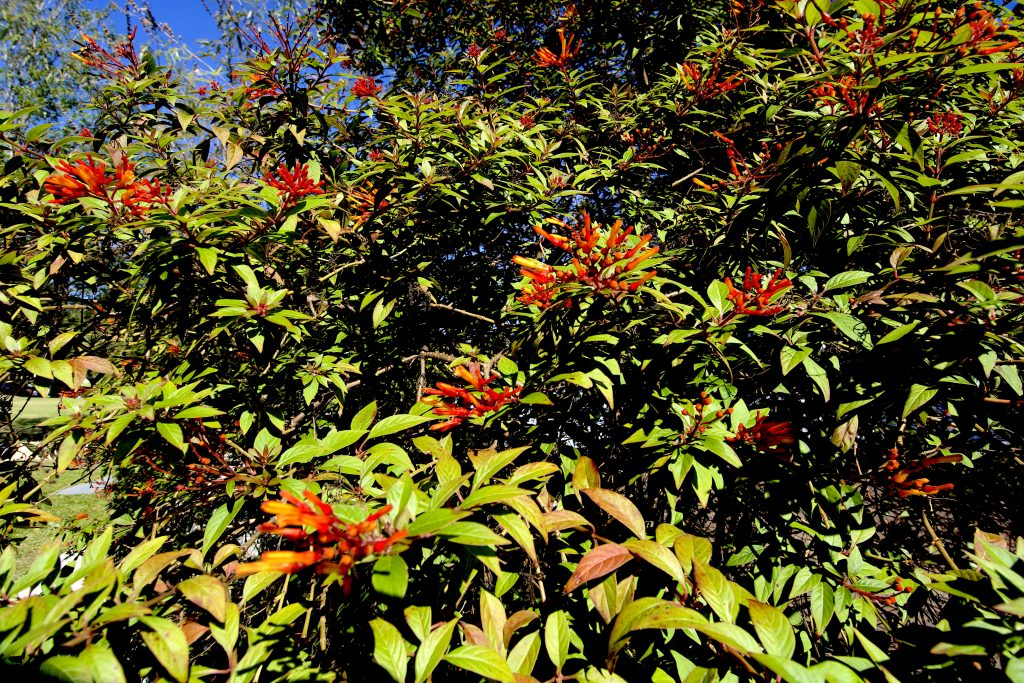 Garden Bush: Eat The Weeds And Other Things, Too