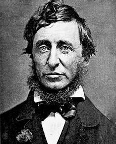 Henry David Thoreau, a chestnut nut