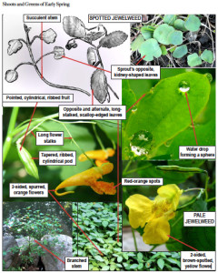 Brill uses a variety of images and information to help you identify a plant.
