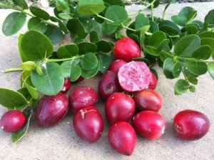 Natal Plums are not plums