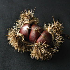 Chestnuts, not flat and round side.