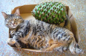Couscous is keeping a Bunya Bunya cone company. Photo by Green Deane