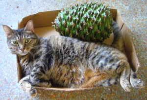 The Bunya cone may be prickly but Cous Cous holds her on to her prime napping box real estate. Photo by Green Deane