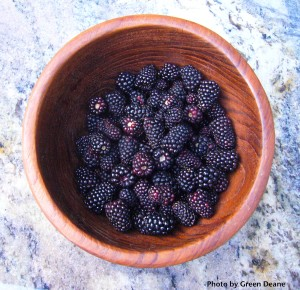 Fresh Blackberries don't store well so they are best eaten fresh. Photo by Green Deane