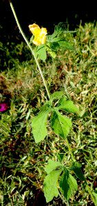 Do you know what this wild edible is? You would if you read the Green Deane Forum