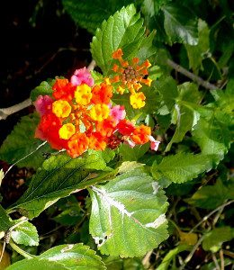 Do you know what this plant is? You would if you read the Green Deane Forum.