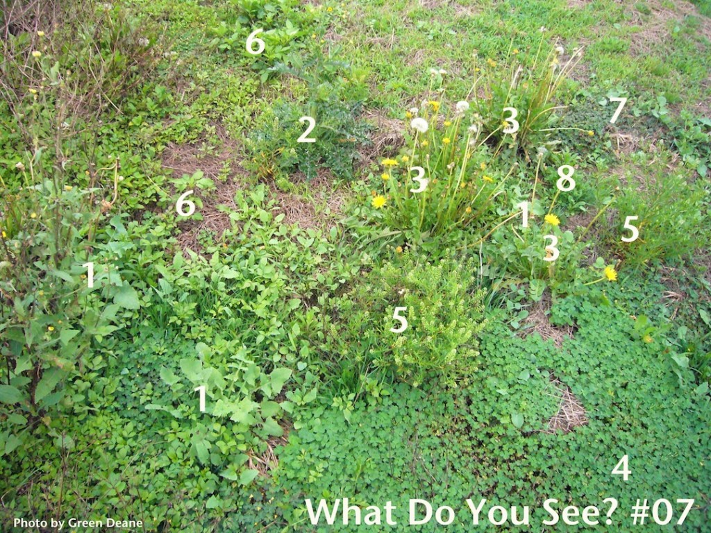 What Do You See 07. Photo by Green Deane