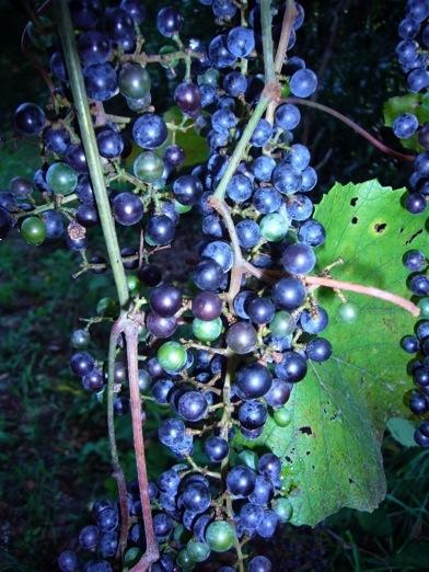 Man Vs Nature Grapes Of Wrath