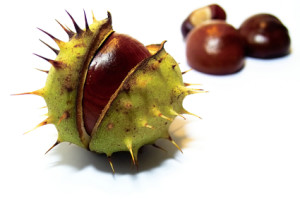 Horse Chestnuts might have medical uses for edema.