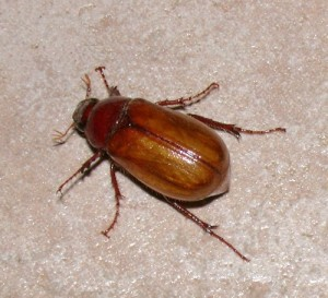 Bug-a-Boo's or Grubs Up - Eat The Weeds and other things, too