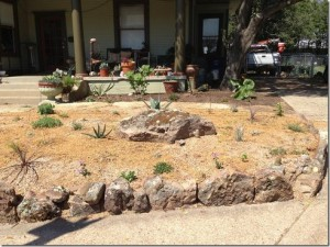 """The native cactus are not """"historic"""" according to a regulatory commission."""