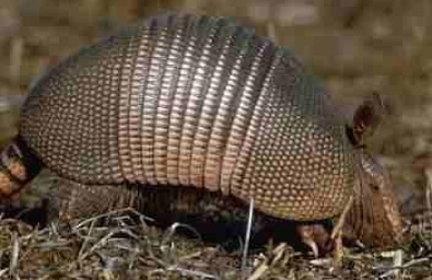 Armadillo: Possum on the Half Shell - Eat The Weeds and