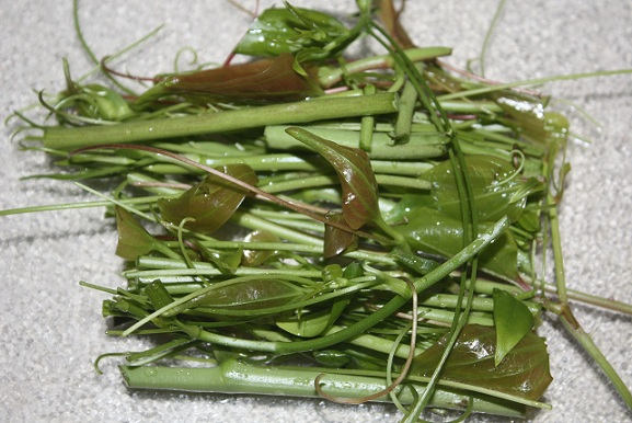 Smilax ready for cooking. Photo by Dewayne Allday