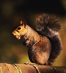 Even squirrels avoid the most tannin-laden part of the acorn.